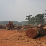 Commercial logging in the Congo.