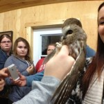 After the owls are banded, the public is given an opportunity to see the owl. (Martha Dillman/CBC)